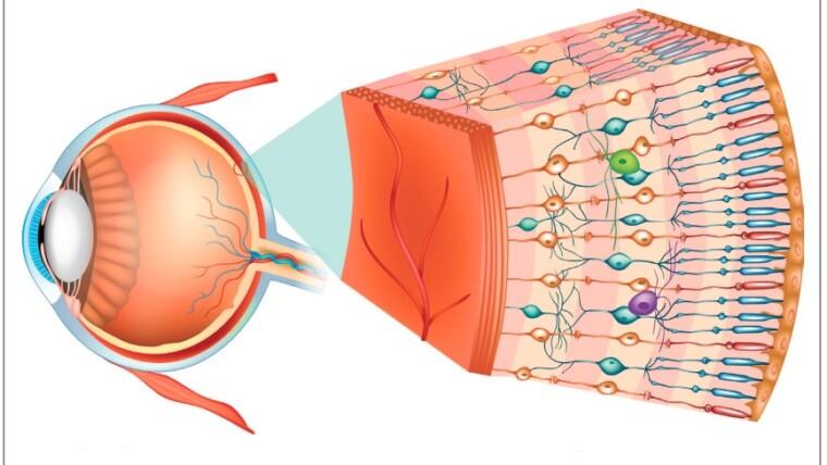 Vitreo-retinal disorders